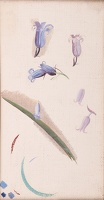 Artist Winifred Knights: Study for Blue Bells, circa 1937
